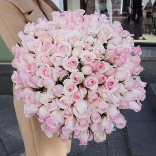 Розы LILI 101 роза