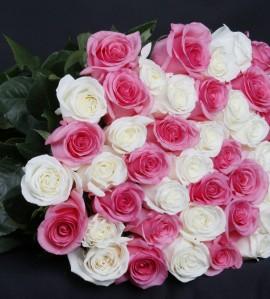 Розы ELISA